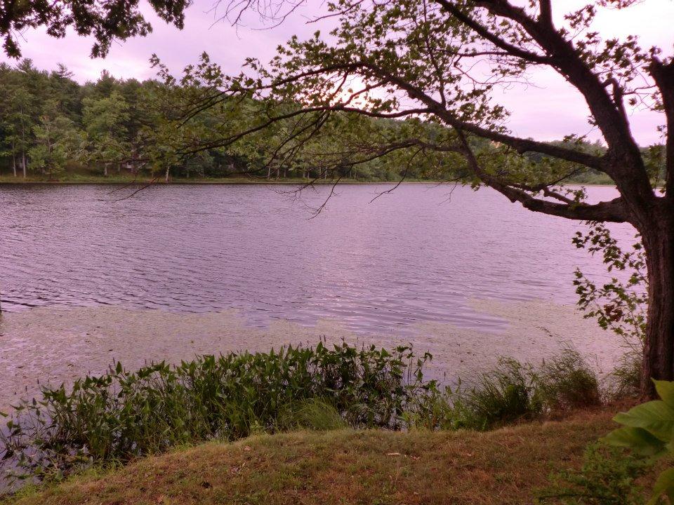 Shoreline view