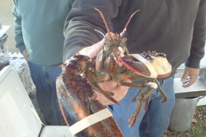 Maine Day Lobster