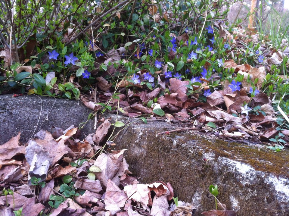 Spring's first flowers at Lyons Lake